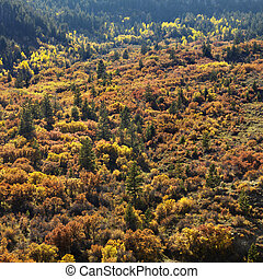Trees in Fall color.
