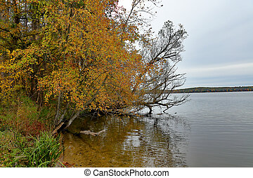 Trees in fall color overhanging a lake's edge