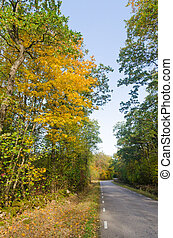 Trees in fall colors by a country road