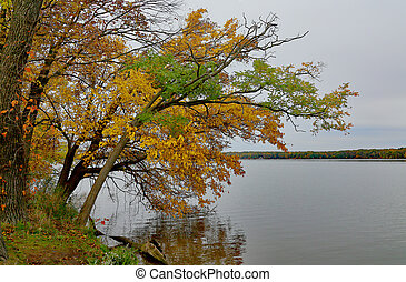 Trees in fall colors leaning over a lake edge