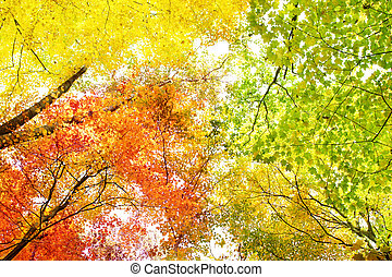 Trees in fall colors