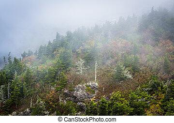 Trees in fog, at Grandfather Mountain, North Carolina.