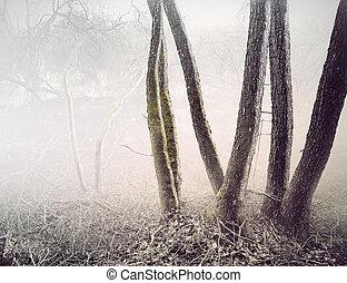 Trees in foggy swamp
