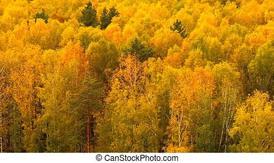 Trees in forest in autumn