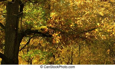 Trees in forest with colorful leaves.