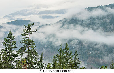 Trees in Front of Cloudy Mountain Landscape