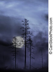 trees in full moon