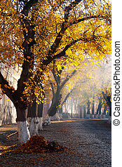 trees in golden foliage on streets. beautiful autumn scenery...