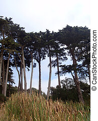 Trees in Golden Gate Park - Trees and tall grass in Golden ...