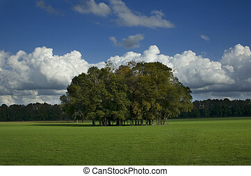 Trees in Grass Field - A copse of trees in a green grass ...