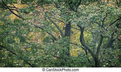 Trees In Heavy Rainfall - Many trees in the rain