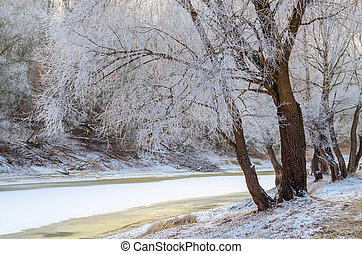 Trees in hoarfrost on the river bank in December