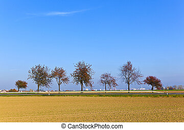 trees in landscape under blue sky