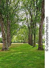 Trees in line