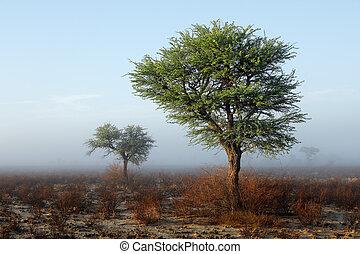 Trees in mist - Kalahari desert