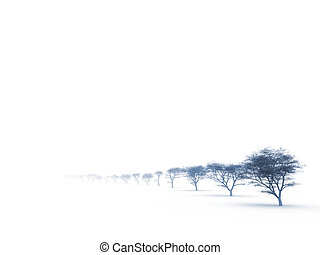 trees in misty haze in a gloomy winter day