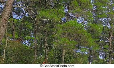 Trees in National park on island Mljet, Dubrovnik...