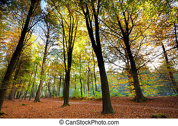 trees in orange autumn forest