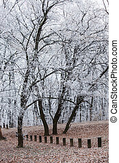 trees in park covered with frost