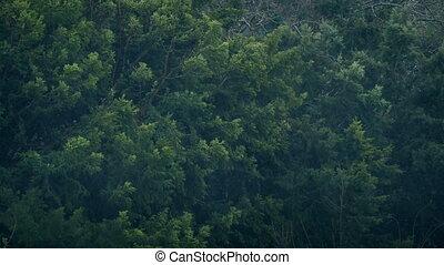 Trees In Rain Storm And Wind - Big bushy trees in rainstorm