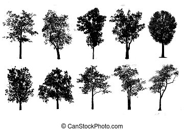 Trees in silhouettes. Create many more trees with leaves.