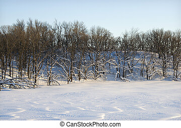Trees in snow.
