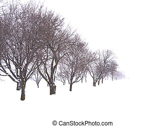 Trees in snow field white background