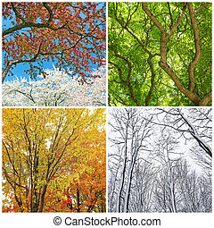 Trees in spring, summer, autumn and winter