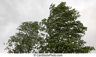 trees in strong wind under storm sky