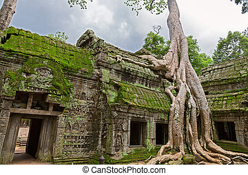 Trees in Ta Prohm, Angkor Wat - Giant tree covering the...