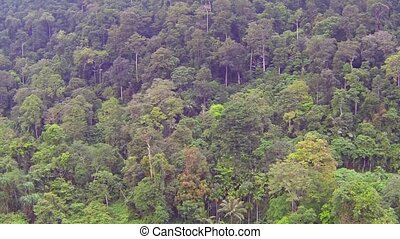 Trees in Thai jungle, aerial video clip