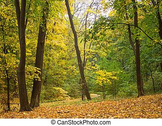 Trees in the autumn garden