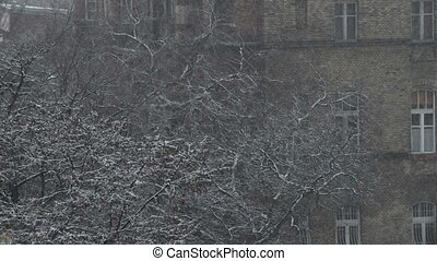 Trees in the cold winter