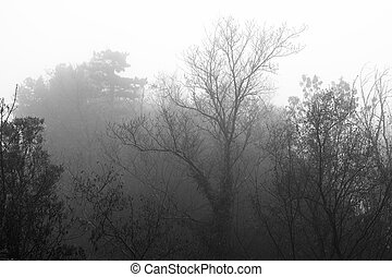 Trees in the dense fog.