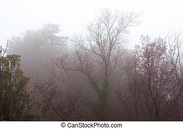Trees in the dense fog.