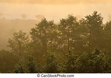 Trees in the fog at dawn