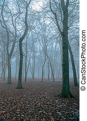 Trees in the fog on an early autumn morning.