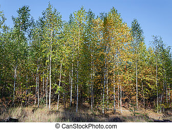trees in the forest on an autumn day