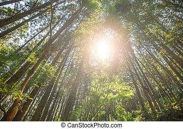 Trees in the forest with sunlight