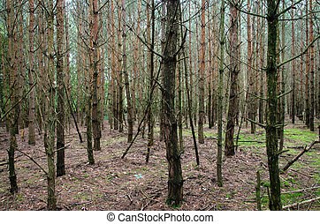 trees in the forrest image