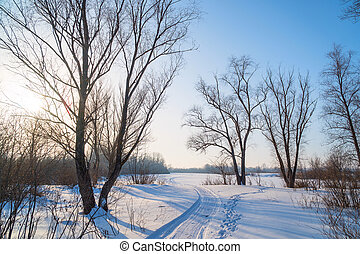Trees in the frosty air on a snow-covered glade