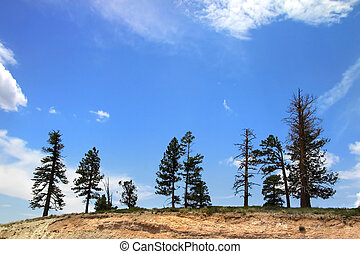 Trees in the hill