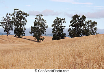 trees in the hills