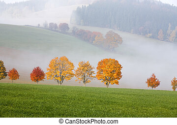 trees in the hills landscape scenery