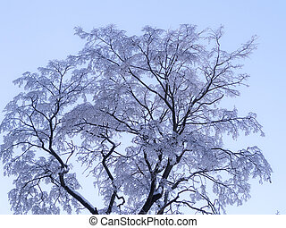 trees in the hoarfrost