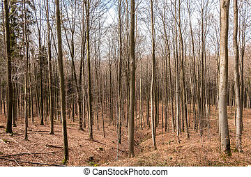 Trees in the middle of the forest