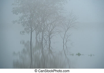 Trees in the mist reflecting on the water