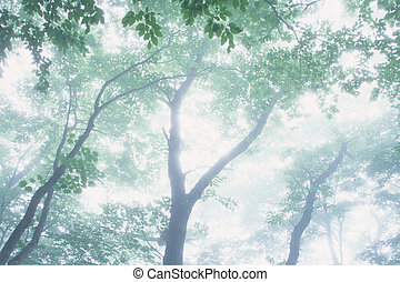 Trees in the mist,