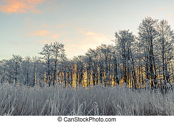 Trees in the morning sunrise in the winter