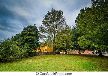 Trees in the Old Salem Historic District, in Winston-Salem, North Carolina.